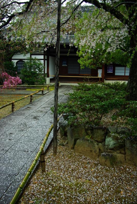 京都新聞写真コンテスト 「花化粧の石畳」