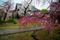 京都新聞写真コンテスト 「社翁の雨」