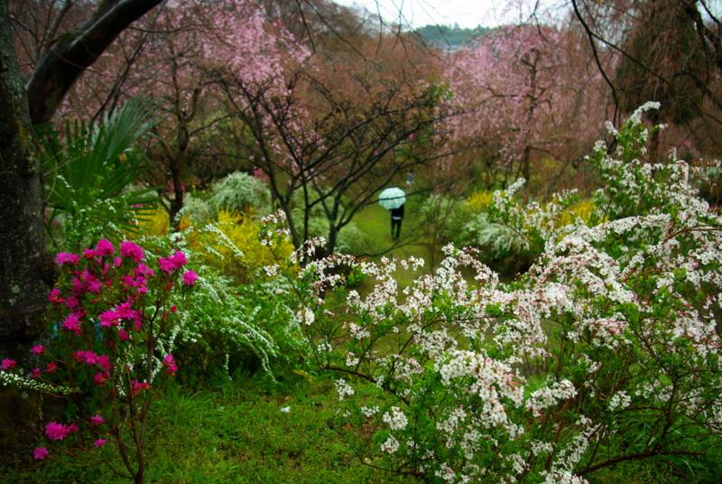 京都新聞写真コンテスト 「小雨ふる春の小山」