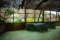 京都新聞写真コンテスト 「春の宴の待ち時間」