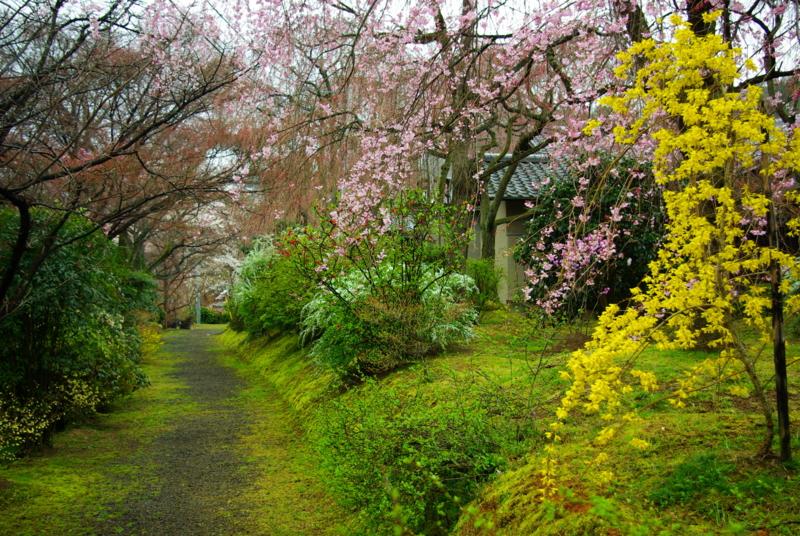 京都新聞写真コンテスト 「春の香りする小路」