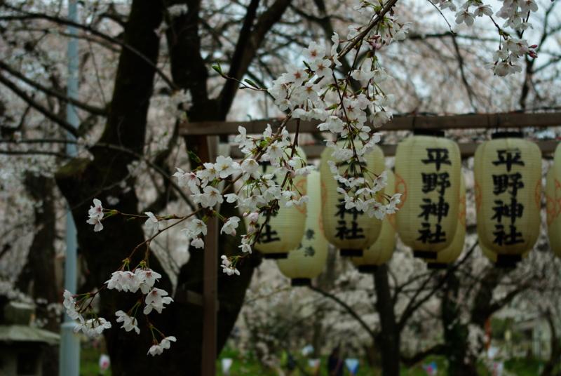 京都新聞写真コンテスト「平野神社の通り雨」