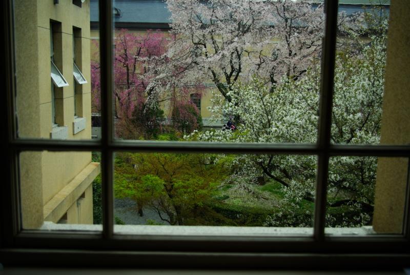 京都新聞写真コンテスト 「歴史と桜の窓」