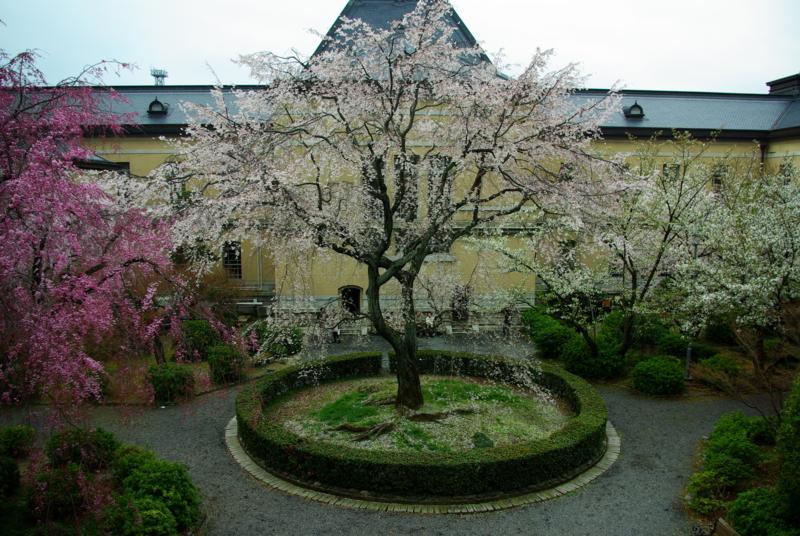 京都新聞写真コンテスト 「府庁旧本館中庭」