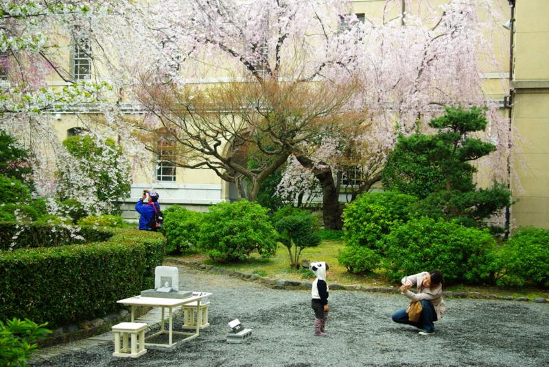 京都新聞写真コンテスト 「桜に はい・チ~ず」
