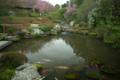 京都新聞写真コンテスト 「花曇りの余香苑」