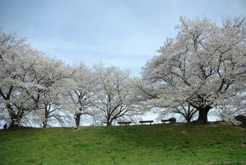 京都新聞写真コンテスト「朝のベンチ」