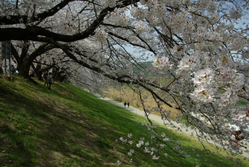 京都新聞写真コンテスト「春を歩く」