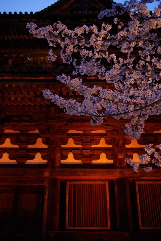京都新聞写真コンテスト 「東寺・春暮の金堂」