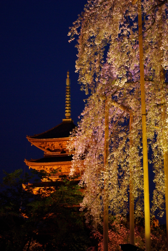 京都新聞写真コンテスト「春宵一刻」