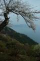 京都新聞写真コンテスト「春雨展望」