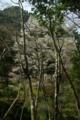 京都新聞写真コンテスト「深山に咲く」