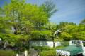 京都新聞写真コンテスト「新緑の剪定」