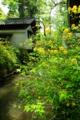京都新聞写真コンテスト「春たけなわ」