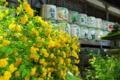 京都新聞写真コンテスト「春の酒樽」