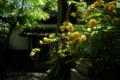 京都新聞写真コンテスト「神社の木陰」