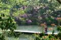 京都新聞写真コンテスト「春・水辺の風景」