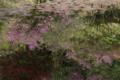京都新聞写真コンテスト「蓮池に咲くツツジ」