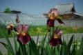 京都新聞写真コンテスト「花の小道・大蓮寺」
