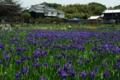 京都新聞写真コンテスト「花の小道・観音堂」