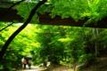 京都新聞写真コンテスト 「梅雨入り宣言されたけど」