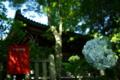 京都新聞写真コンテスト「初夏の雨あがり」