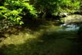 京都新聞写真コンテスト  「真夏の涼」