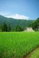 京都新聞写真コンテスト 「夏の美山」