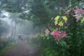 京都新聞写真コンテスト 「ゆり園・仲良し散策」