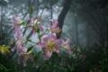 京都新聞写真コンテスト「幻想の森」