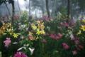 京都新聞写真コンテスト「幻想の森2」