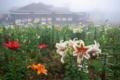 京都新聞写真コンテスト 「天空ゆりトレイン」