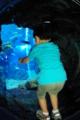 京都新聞写真コンテスト 「ボクの海底探検」