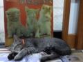 京都新聞写真コンテスト 「仔猫の見た夢」