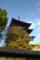 京都新聞写真コンテスト 「晩秋の東寺」