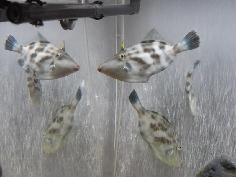 京都新聞写真コンテスト「鏡に恋するウマズラ」