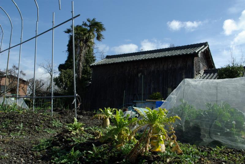 京都新聞写真コンテスト「小さな収穫」