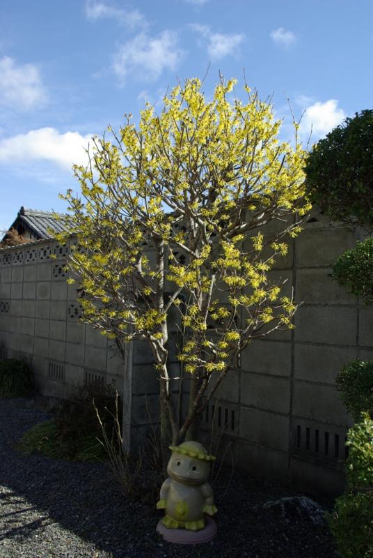 京都新聞写真コンテスト「早春の花とカッパちゃん」