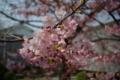 京都新聞写真コンテスト「こぼれる春」