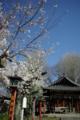 京都新聞写真コンテスト「咲き始め」