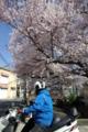 京都新聞写真コンテスト「一旦停止」