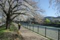 京都新聞写真コンテスト「景色変わるいつもの散歩道」