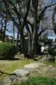 京都新聞写真コンテスト「飛び石温まる春の庭」