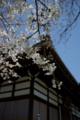 京都新聞写真コンテスト「寺院の桜」