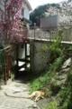 京都新聞写真コンテスト「春の午後」