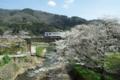 京都新聞写真コンテスト「笠置の春」