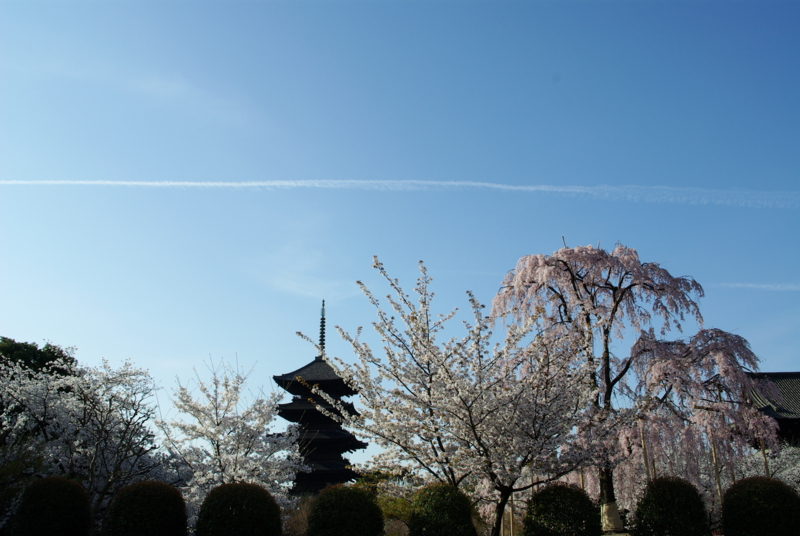 京都新聞写真コンテスト「春の朝」