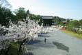 京都新聞写真コンテスト「あ、サクラ咲いた」