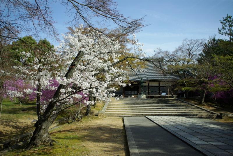 京都新聞写真コンテスト「仁和寺・金堂の小さな春」