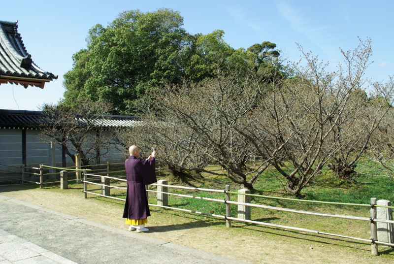 京都新聞写真コンテスト「ブログ更新」